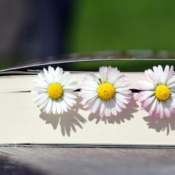 Reasons novelists should read